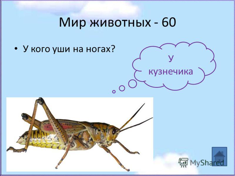 Мир животных - 60 У кого уши на ногах? У кузнечика