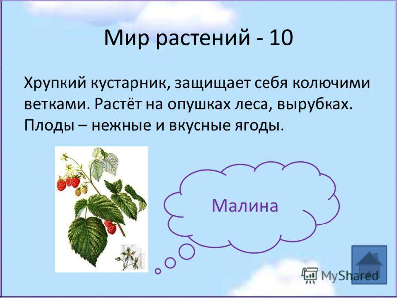 Мир растений - 10 Хрупкий кустарник, защищает себя колючими ветками. Растёт на опушках леса, вырубках. Плоды – нежные и вкусные ягоды. Малина