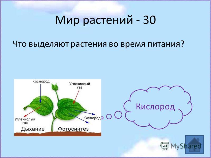 Мир растений - 30 Что выделяют растения во время питания? Кислород