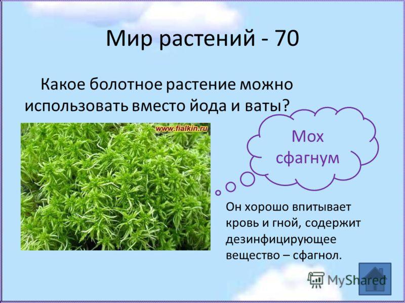 Мир растений - 70 Какое болотное растение можно использовать вместо йода и ваты? Мох сфагнум Он хорошо впитывает кровь и гной, содержит дезинфицирующее вещество – сфагнол.