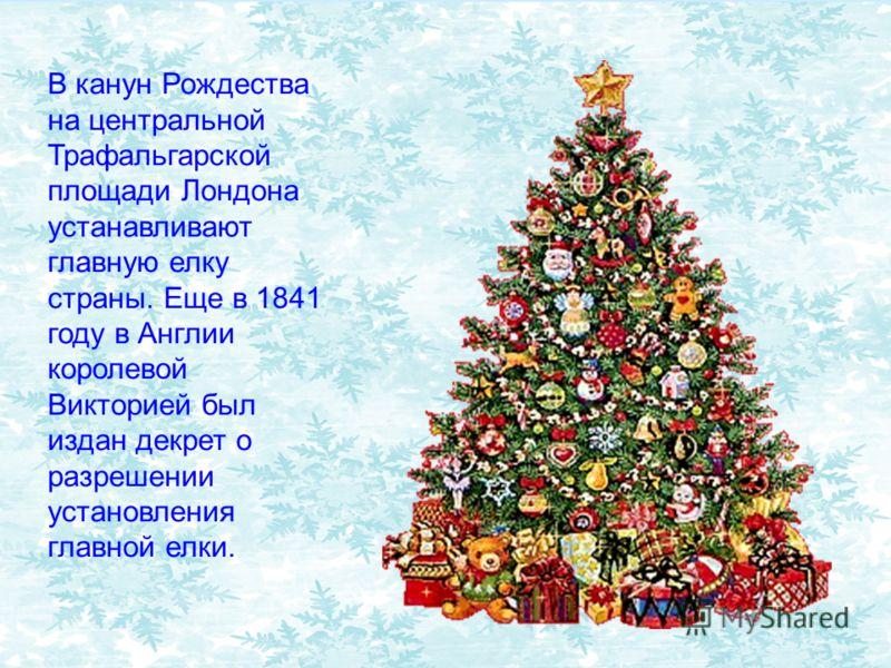 В канун Рождества на центральной Трафальгарской площади Лондона устанавливают главную елку страны. Еще в 1841 году в Англии королевой Викторией был издан декрет о разрешении установления главной елки.