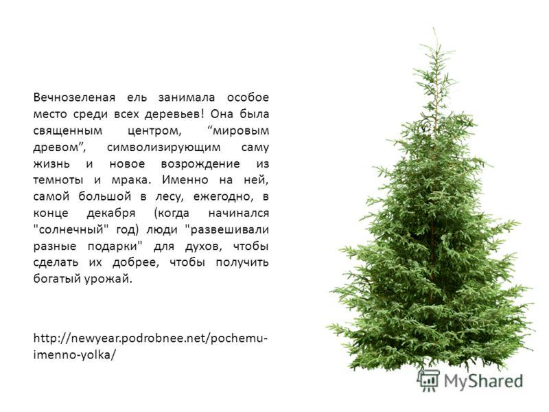 Вечнозеленая ель занимала особое место среди всех деревьев! Она была священным центром, мировым древом, символизирующим саму жизнь и новое возрождение из темноты и мрака. Именно на ней, самой большой в лесу, ежегодно, в конце декабря (когда начинался