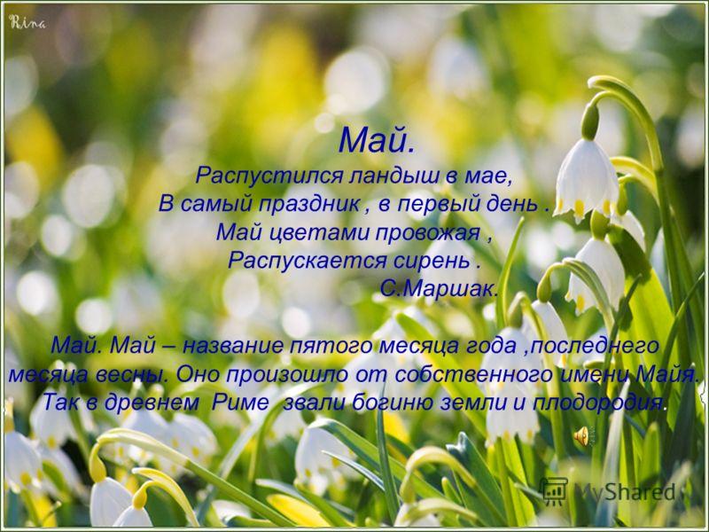 Май. Распустился ландыш в мае, В самый праздник, в первый день. Май цветами провожая, Распускается сирень. С.Маршак. Май. Май – название пятого месяца года,последнего месяца весны. Оно произошло от собственного имени Майя. Так в древнем Риме звали бо