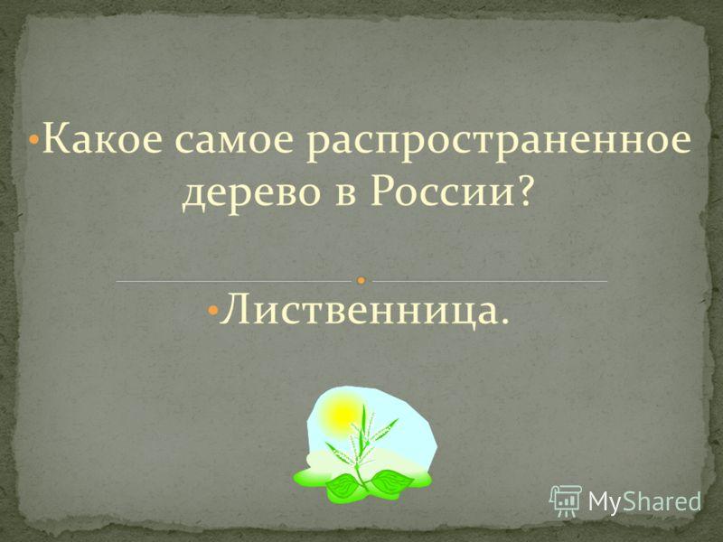 Какое самое распространенное дерево в России? Лиственница.