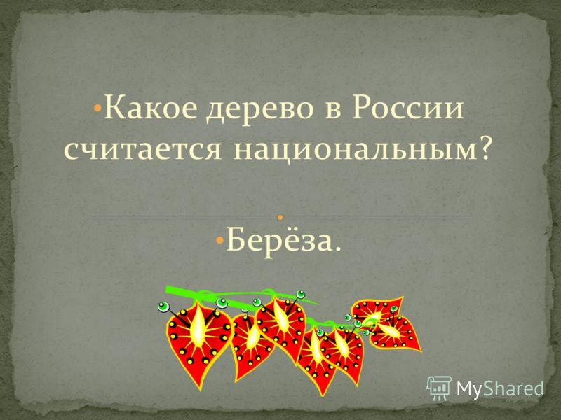 Какое дерево в России считается национальным? Берёза.