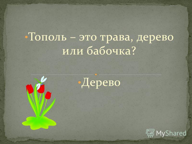 Тополь – это трава, дерево или бабочка? Дерево