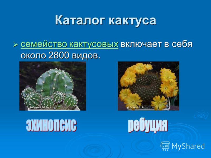 Каталог кактуса семейство кактусовых включает в себя около 2800 видов. семейство кактусовых включает в себя около 2800 видов. семейство кактусовых семейство кактусовых