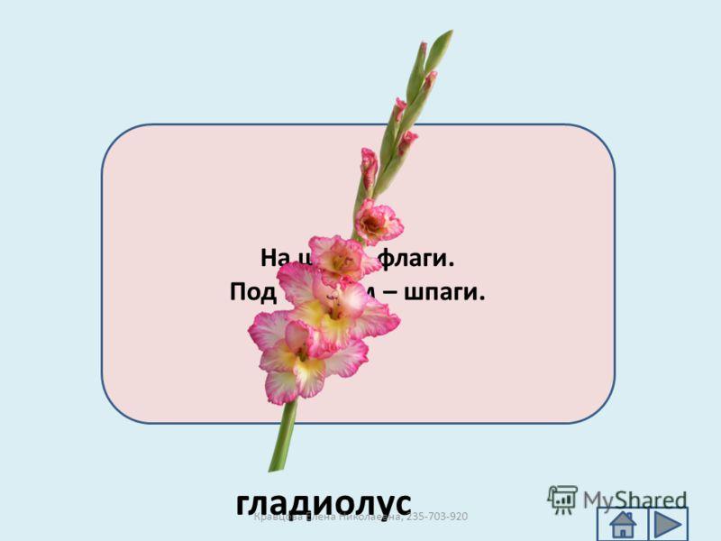 На шесте флаги. Под шестом – шпаги. гладиолус Кравцова Елена Николаевна, 235-703-920