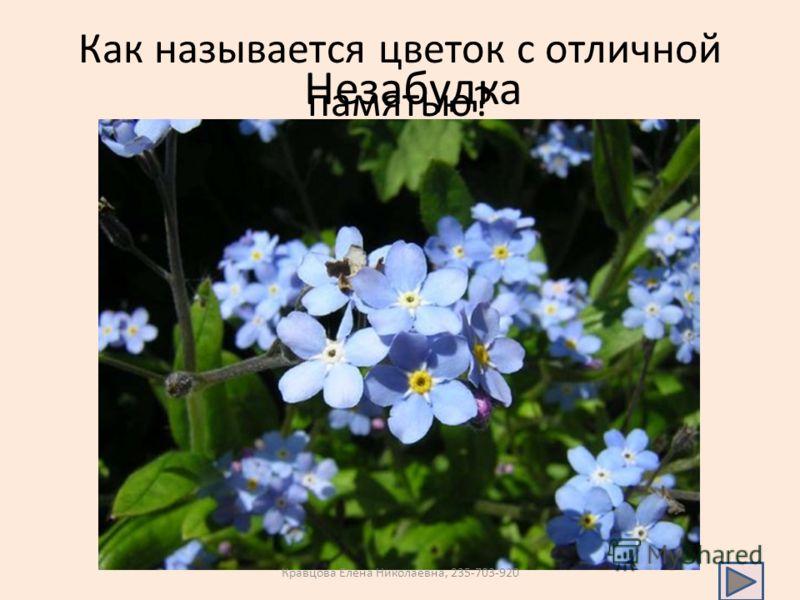 Как называется цветок с отличной памятью? Незабудка Кравцова Елена Николаевна, 235-703-920