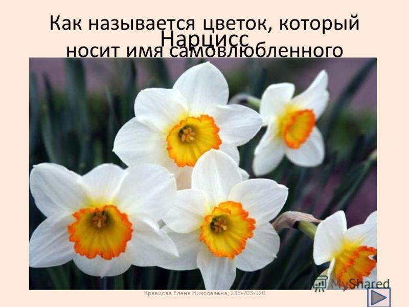 Как называется цветок, который носит имя самовлюбленного принца? Нарцисс Кравцова Елена Николаевна, 235-703-920