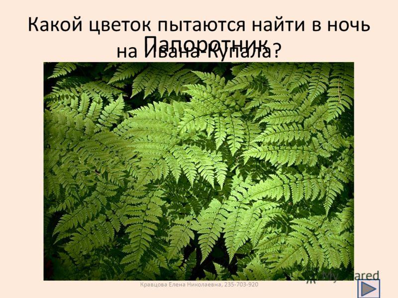 Какой цветок пытаются найти в ночь на Ивана-Купала? Папоротник Кравцова Елена Николаевна, 235-703-920