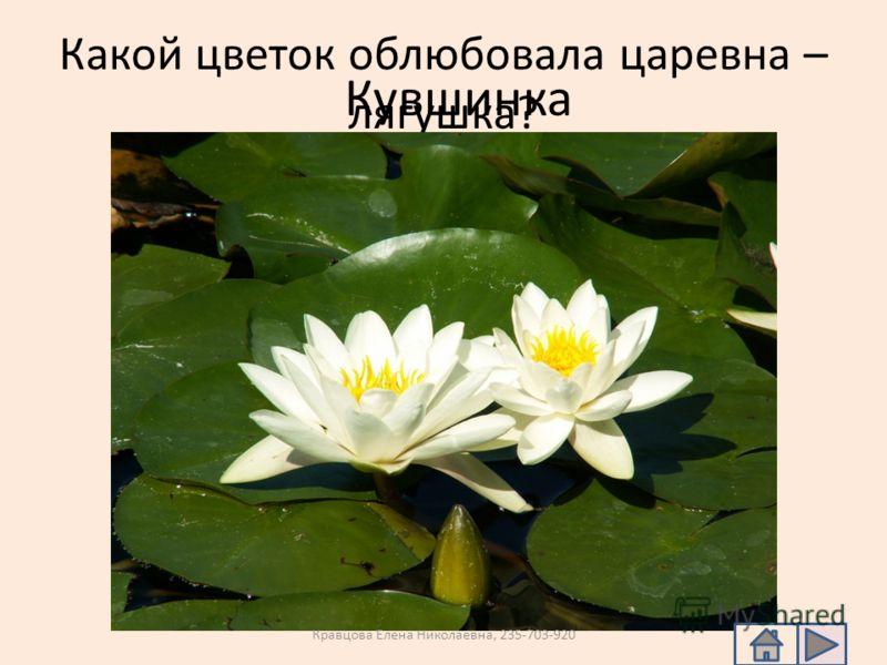 Какой цветок облюбовала царевна – лягушка? Кувшинка Кравцова Елена Николаевна, 235-703-920