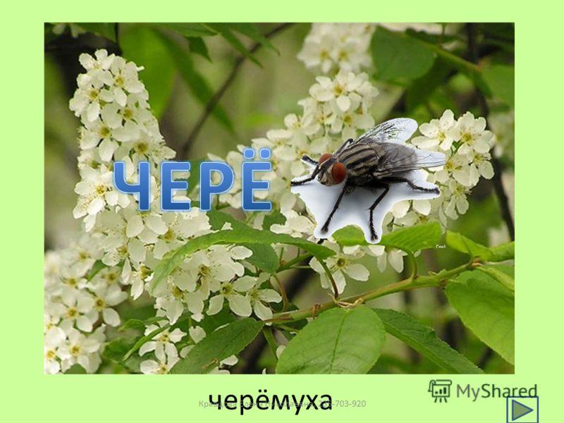 черёмуха Кравцова Елена Николаевна, 235-703-920