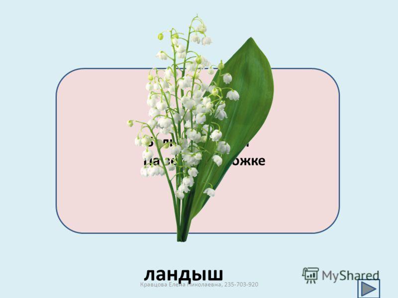 Белые горошки На зеленой ножке ландыш Кравцова Елена Николаевна, 235-703-920