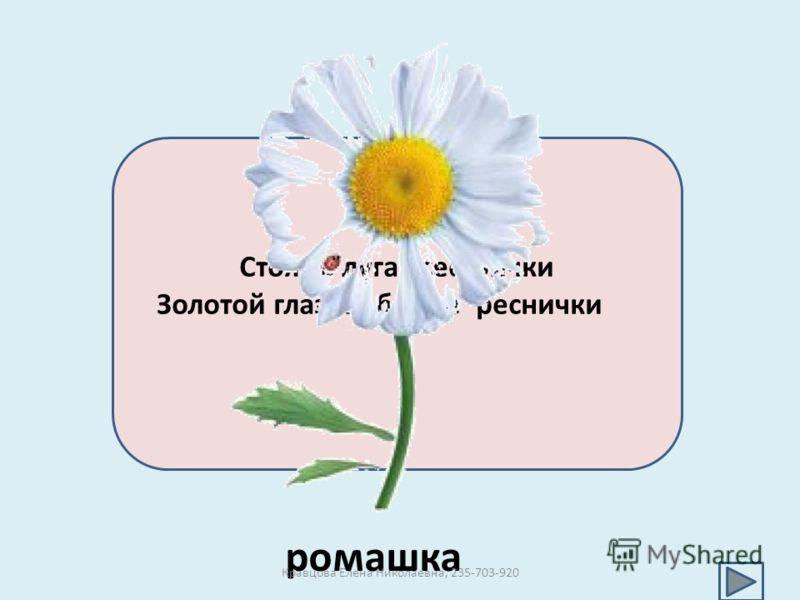Стоят в лугах сестрички Золотой глазок, белые реснички ромашка Кравцова Елена Николаевна, 235-703-920
