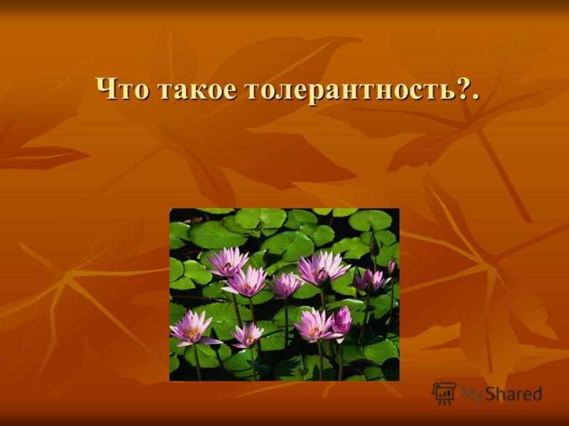 Что такое толерантность?.