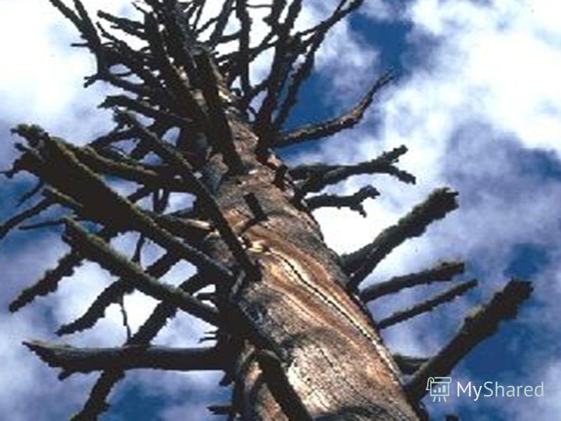 www.themegallery.com Песня Е. Крылатова «Прекрасное далеко» из кинофильма «Гостья из будущего».