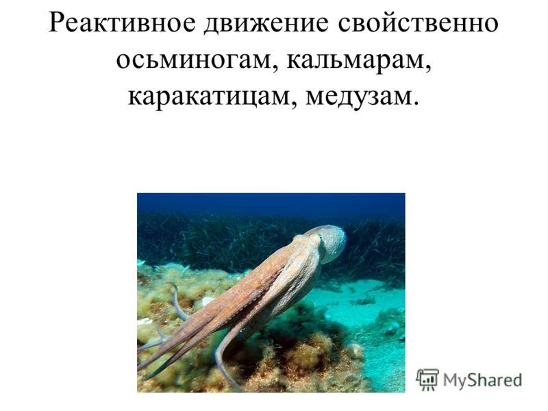 Реактивное движение свойственно осьминогам, кальмарам, каракатицам, медузам.