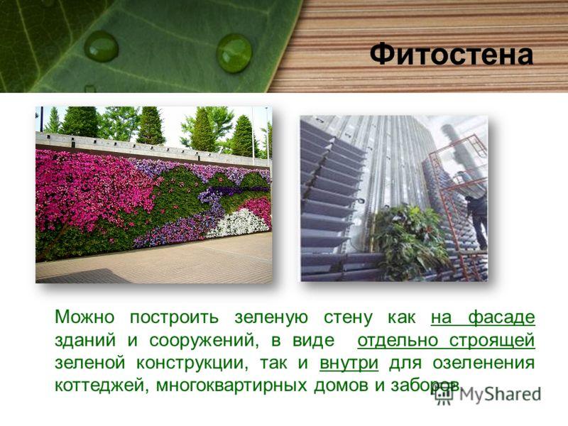 Фитостена Можно построить зеленую стену как на фасаде зданий и сооружений, в виде отдельно строящей зеленой конструкции, так и внутри для озеленения коттеджей, многоквартирных домов и заборов.