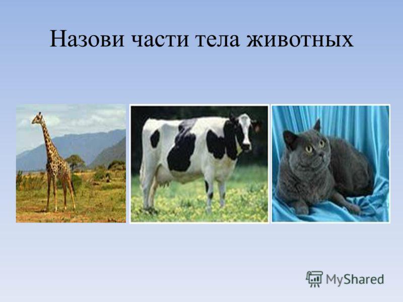 Назови части тела животных