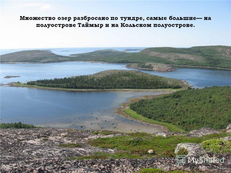 Множество озер разбросано по тундре, самые большие на полуострове Таймыр и на Кольском полуострове.