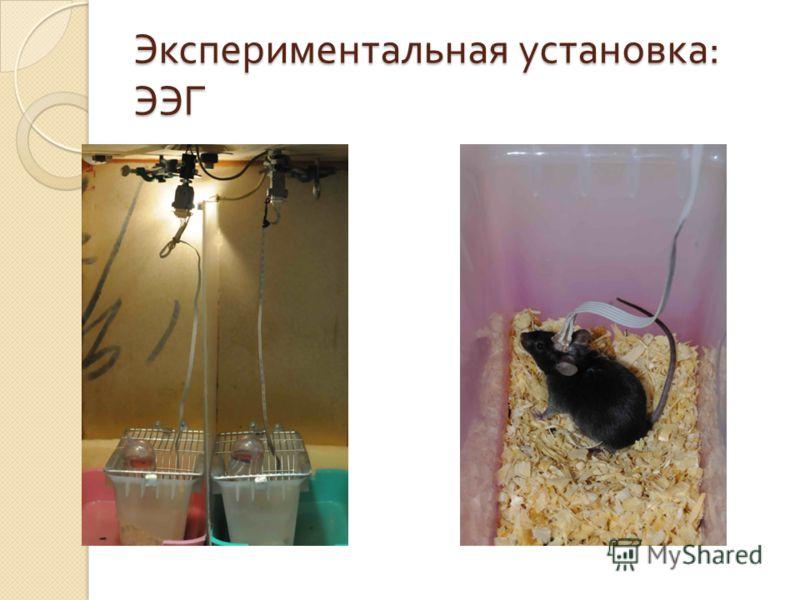 Экспериментальная установка : ЭЭГ