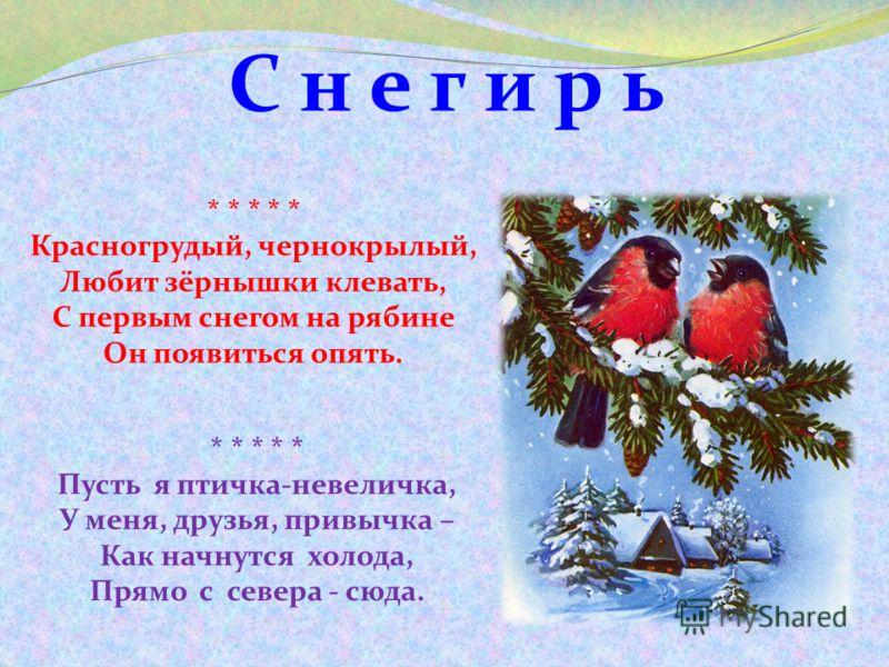 С н е г и р ь * * * * * Пусть я птичка-невеличка, У меня, друзья, привычка – Как начнутся холода, Прямо с севера - сюда. * * * * * Красногрудый, чернокрылый, Любит зёрнышки клевать, С первым снегом на рябине Он появиться опять.