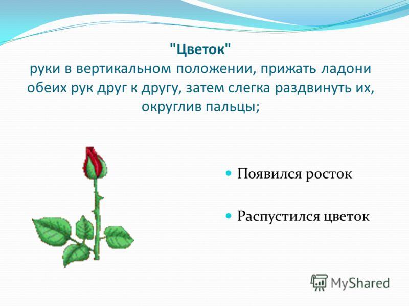 Цветок руки в вертикальном положении, прижать ладони обеих рук друг к другу, затем слегка раздвинуть их, округлив пальцы; Появился росток Распустился цветок