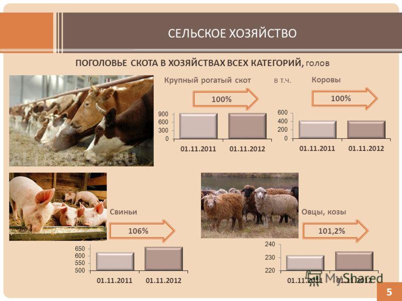 СЕЛЬСКОЕ ХОЗЯЙСТВО ПОГОЛОВЬЕ СКОТА В ХОЗЯЙСТВАХ ВСЕХ КАТЕГОРИЙ, голов 5 Крупный рогатый скот Коровы в т.ч. СвиньиОвцы, козы