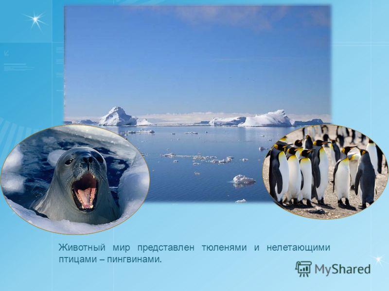 Животный мир представлен тюленями и нелетающими птицами – пингвинами.