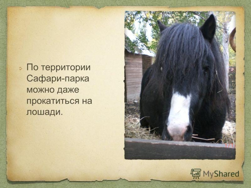 По территории Сафари-парка можно даже прокатиться на лошади.