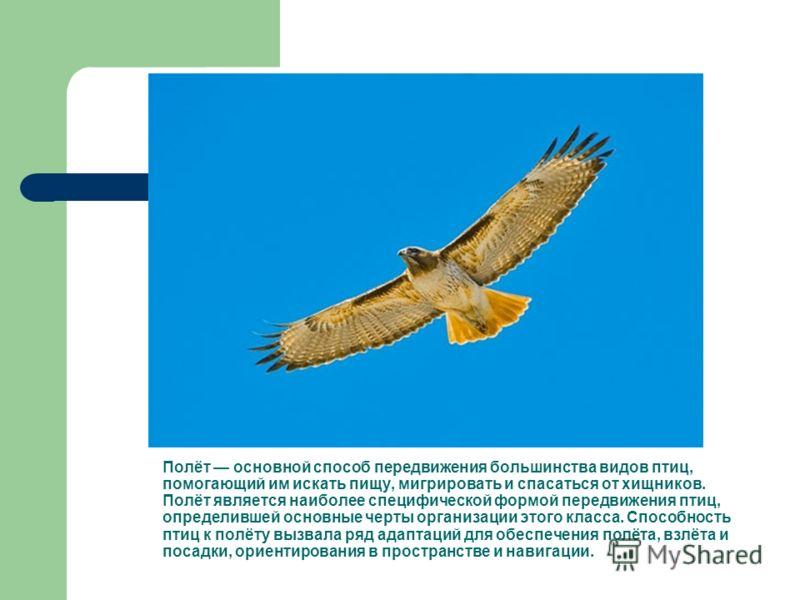 Полёт основной способ передвижения большинства видов птиц, помогающий им искать пищу, мигрировать и спасаться от хищников. Полёт является наиболее специфической формой передвижения птиц, определившей основные черты организации этого класса. Способнос