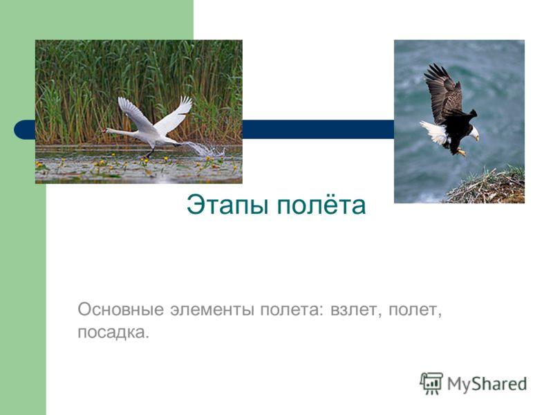 Этапы полёта Основные элементы полета: взлет, полет, посадка.