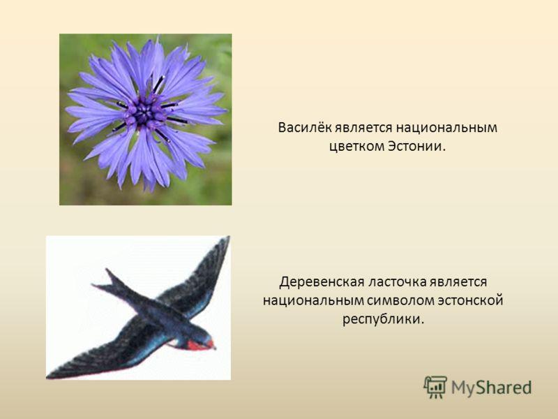 Деревенская ласточка является национальным символом эстонской республики. Василёк является национальным цветком Эстонии.