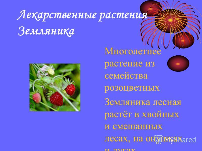 Лекарственные растения Земляника Многолетнее растение из семейства розоцветных Земляника лесная растёт в хвойных и смешанных лесах, на опушках и лугах