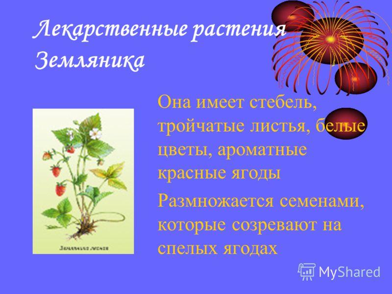Лекарственные растения Земляника Она имеет стебель, тройчатые листья, белые цветы, ароматные красные ягоды Размножается семенами, которые созревают на спелых ягодах
