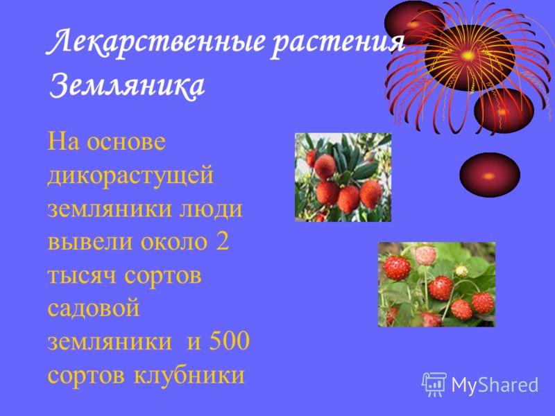 Лекарственные растения Земляника На основе дикорастущей земляники люди вывели около 2 тысяч сортов садовой земляники и 500 сортов клубники