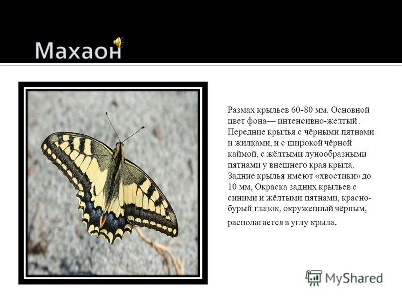 Морфо Менелай (лат. Morpho menelaus) бабочка из сем. Nymphalidae.лат.бабочка Nymphalidae Цвет сияющих ярким металлическим блеском крыльев до тёмно-синего. Встречаются экземпляры и с промежуточной окраской - голубой, тёмно-голубой, синей.