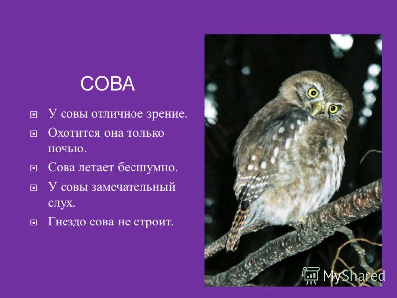 СОВА У совы отличное зрение. Охотится она только ночью. Сова летает бесшумно. У совы замечательный слух. Гнездо сова не строит.