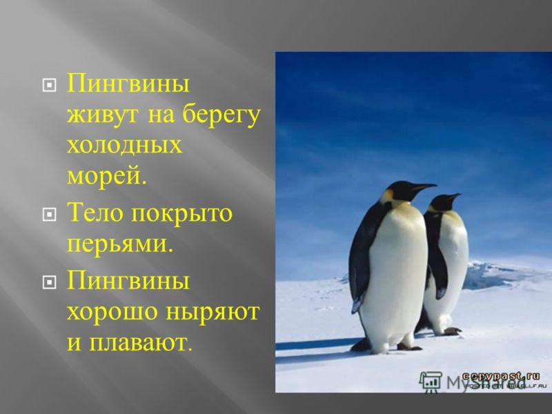 Пингвины живут на берегу холодных морей. Тело покрыто перьями. Пингвины хорошо ныряют и плавают.