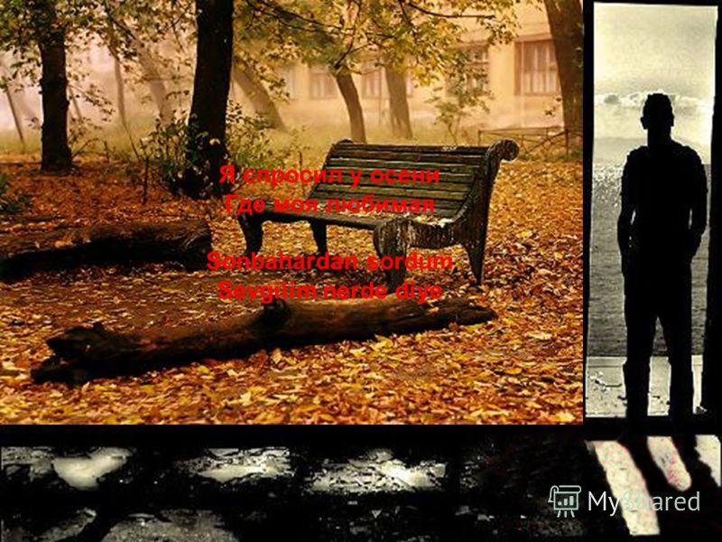 Тополь забросал меня Осеннею листвой Kavak bana sonbahar yaprakları döktü.