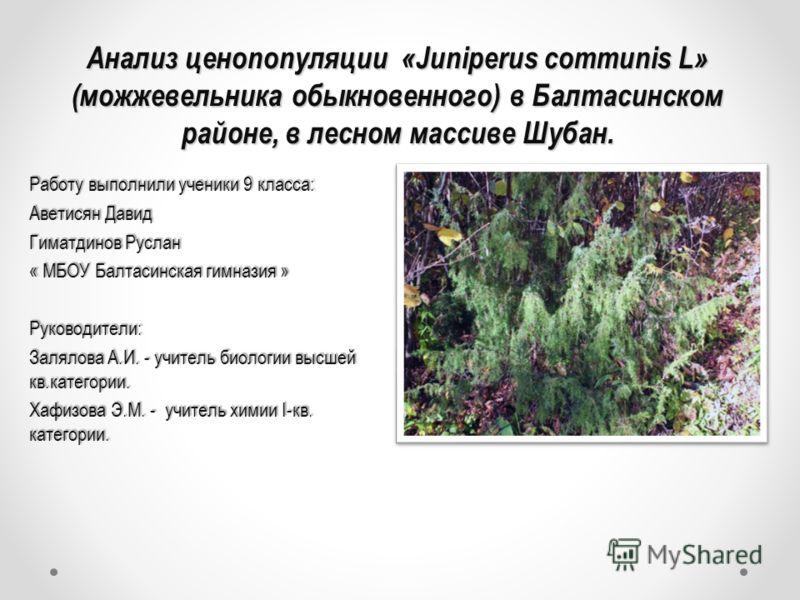 Анализ ценопопуляции «Juniperus communis L» (можжевельника обыкновенного) в Балтасинском районе, в лесном массиве Шубан. Анализ ценопопуляции «Juniperus communis L» (можжевельника обыкновенного) в Балтасинском районе, в лесном массиве Шубан. Работу в