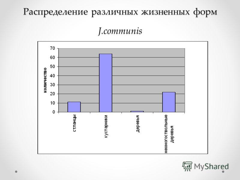 Распределение различных жизненных форм J.communis Распределение различных жизненных форм J.communis