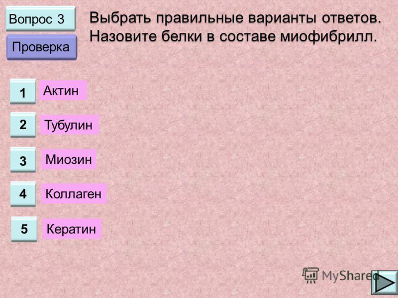 Вопрос 3 1 2 3 4 Выбрать правильные варианты ответов. Назовите белки в составе миофибрилл. Актин Тубулин Миозин Коллаген Проверка 5 Кератин
