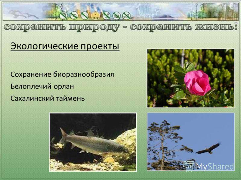 Сохранение биоразнообразия Белоплечий орлан Сахалинский таймень Экологические проекты
