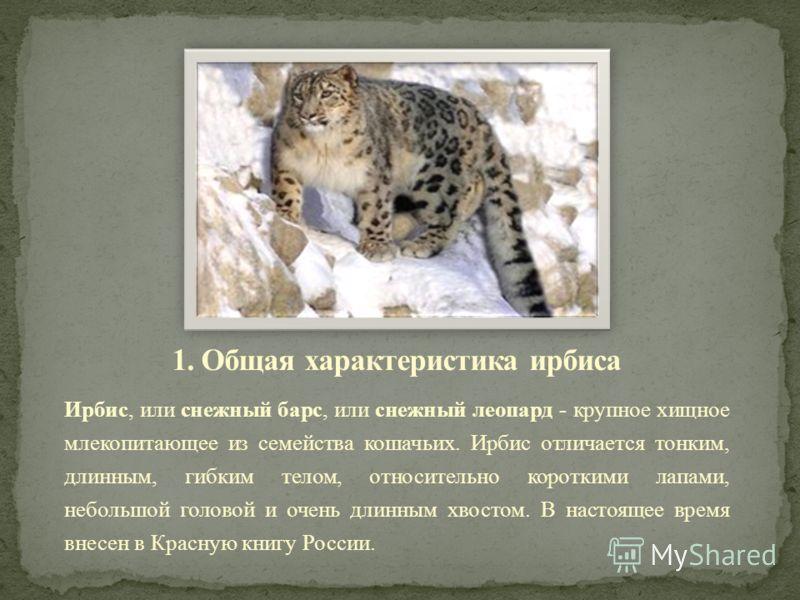 Ирбис, или снежный барс, или снежный леопард - крупное хищное млекопитающее из семейства кошачьих. Ирбис отличается тонким, длинным, гибким телом, относительно короткими лапами, небольшой головой и очень длинным хвостом. В настоящее время внесен в Кр
