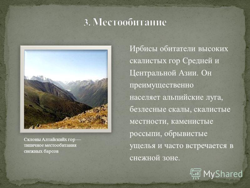 Ирбисы обитатели высоких скалистых гор Средней и Центральной Азии. Он преимущественно населяет альпийские луга, безлесные скалы, скалистые местности, каменистые россыпи, обрывистые ущелья и часто встречается в снежной зоне. Склоны Алтайскийх гор типи