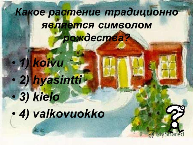 Какое растение традиционно является символом рождества? 1) koivu 2) hyasintti 3) kielo 4) valkovuokko