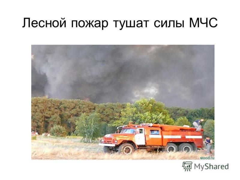 Лесной пожар тушат силы МЧС