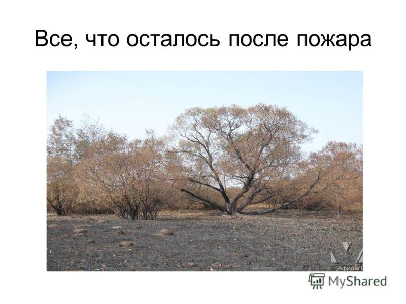 Все, что осталось после пожара